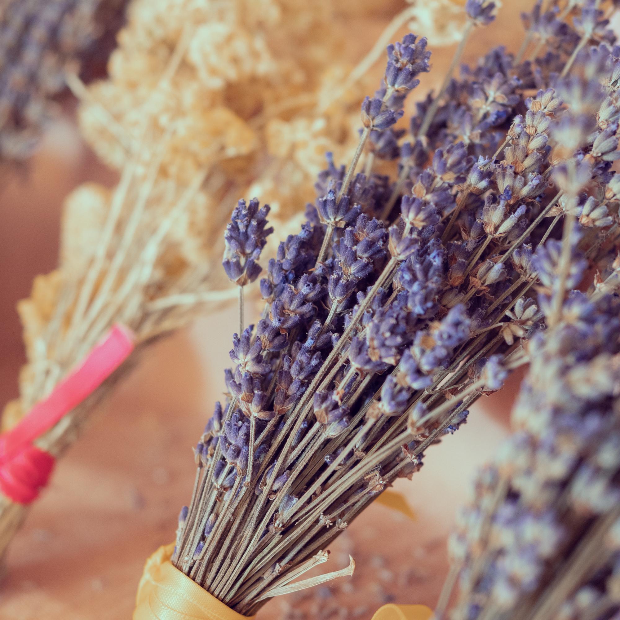 weekend tarn et Garonne ferme de lavande de lacontale