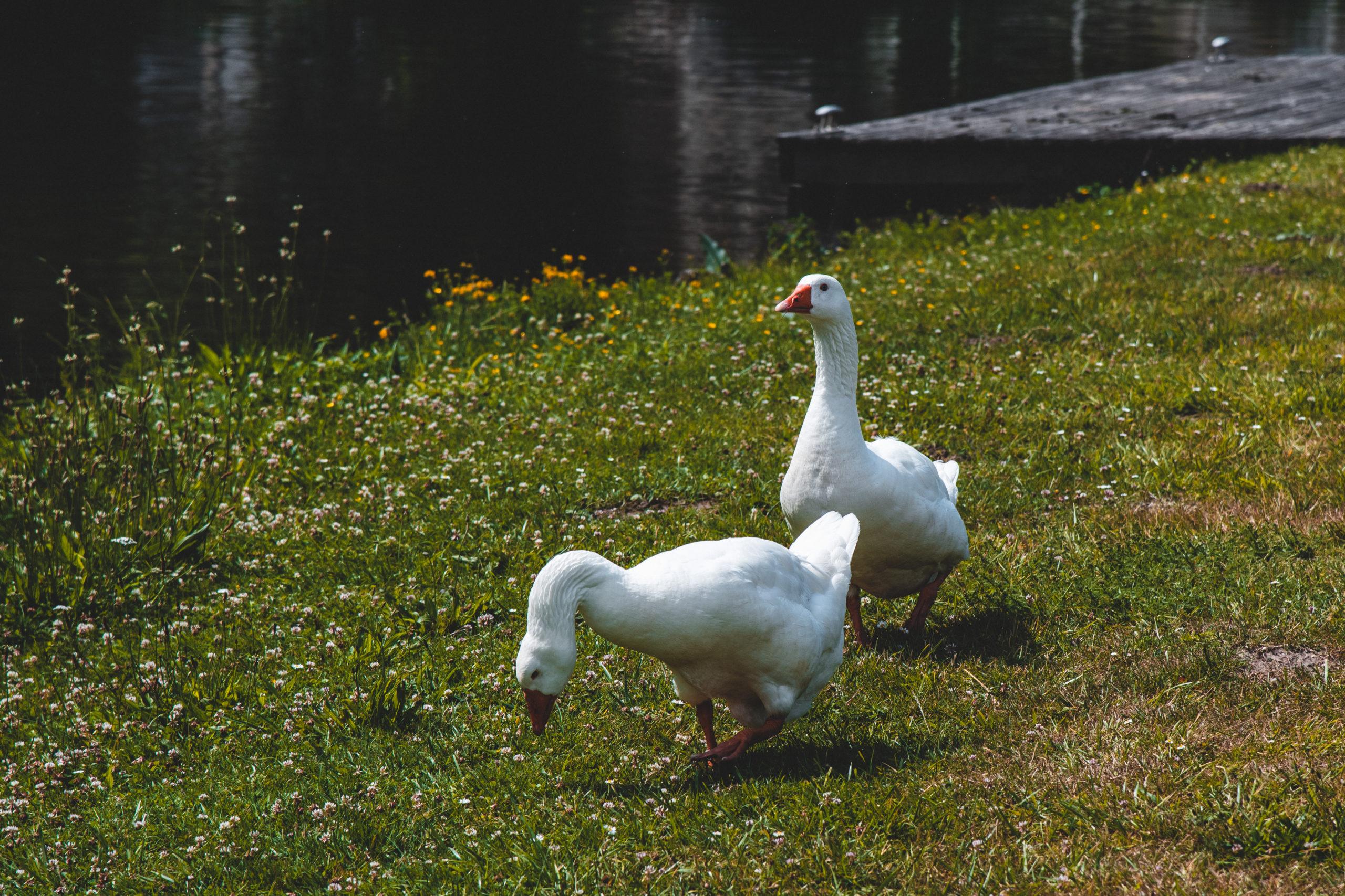 Vallée de Somme étangs éclusier vaux marais somme