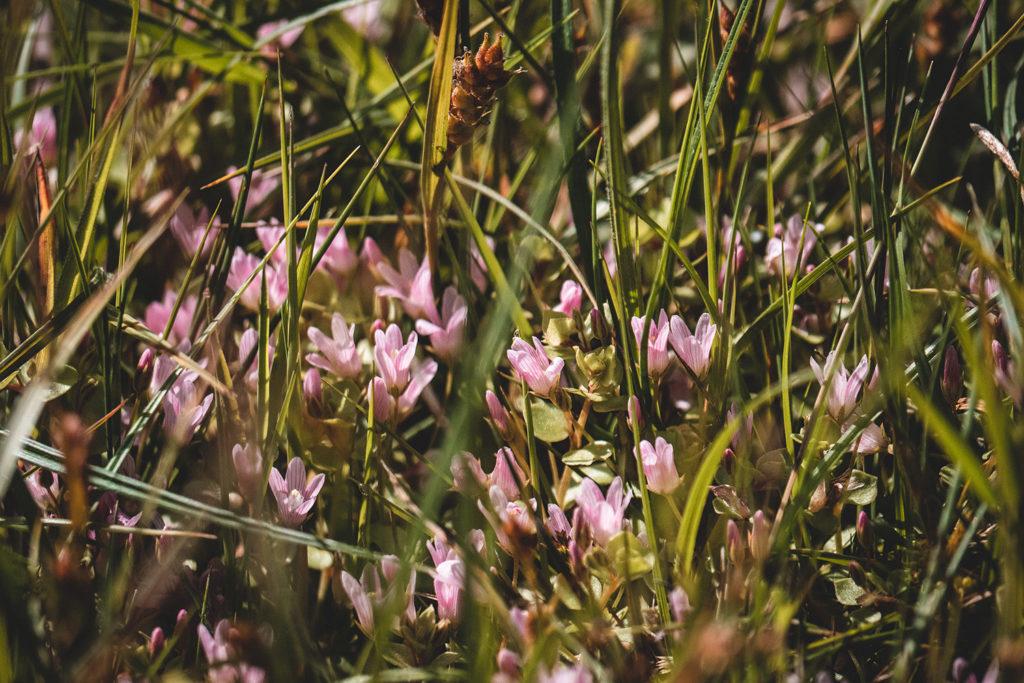 Vallée de Somme Maison des Marais guide naturaliste Longpré les corps saints